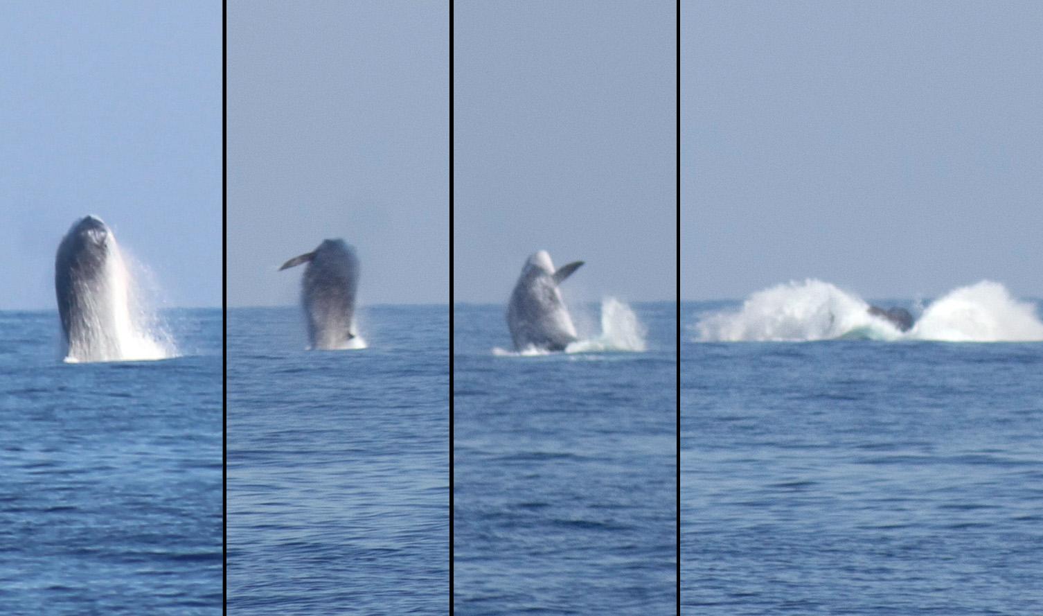 Le ballet des baleines